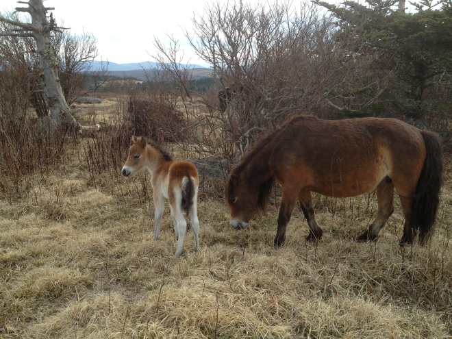 Baby ponies!!! Life is now complete.