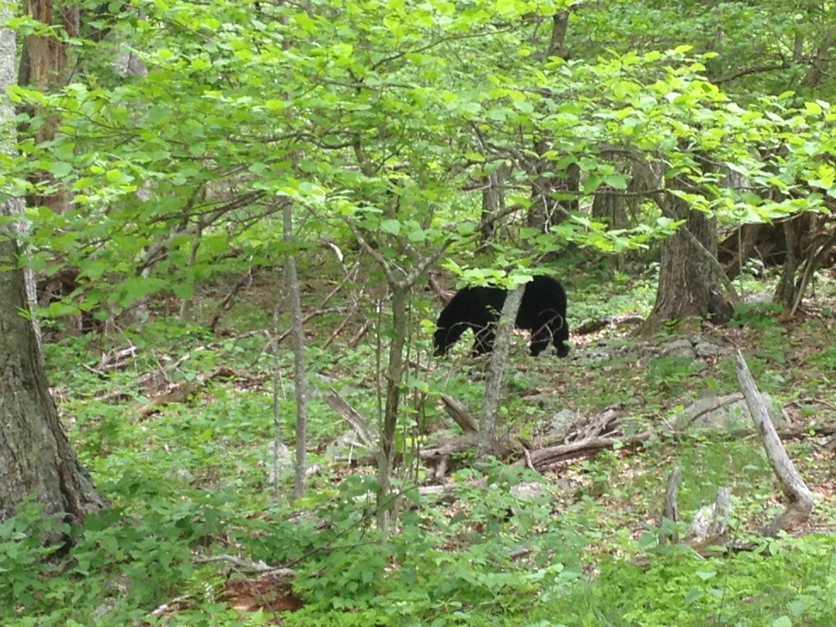 operation virginia u2013 success u2013 adventures on the appalachian trail